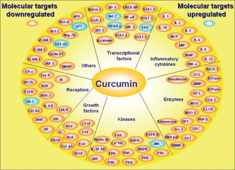 Figure 8: Proteins, enzymes, receptors modulated by curcumin<sup>[61]</sup>