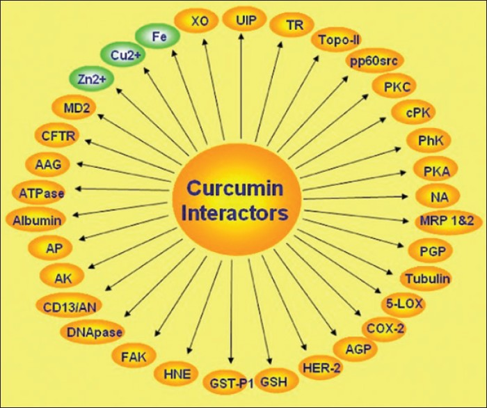 Figure 9: Proteins,enzymes, receptors and metals bind with curcumin<sup>[8]</sup>