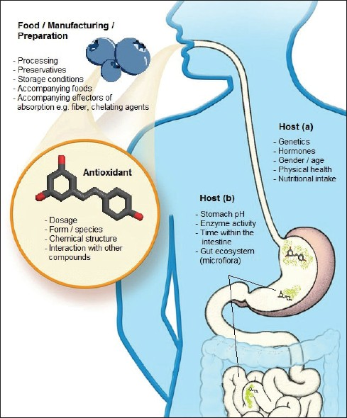 mechanism of action of steroids in multiple sclerosis