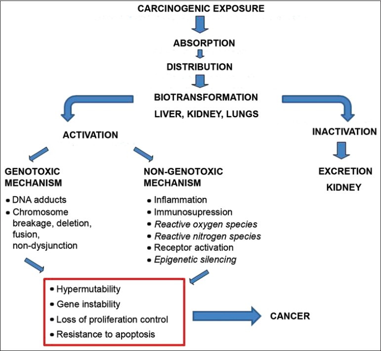 Figure 1: Mechanism of dietary carcinogenesis
